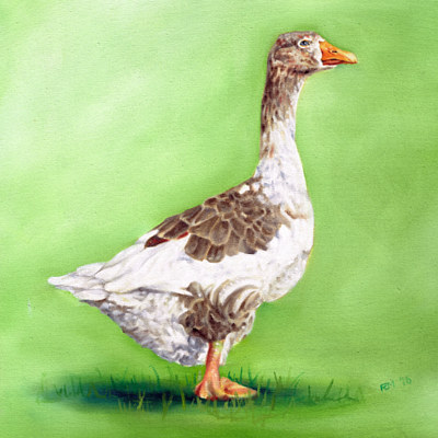Oil painting Goose 1 by Richard Mountford