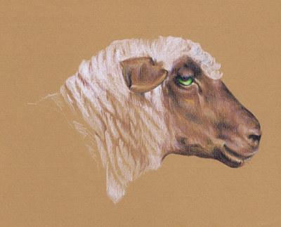 Painting The Surly Sheep by Richard Mountford