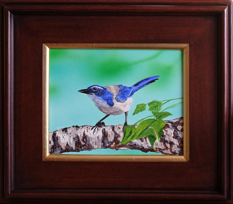 Acrylic painting Scrub Jay-8x10 by Frans Geerlings