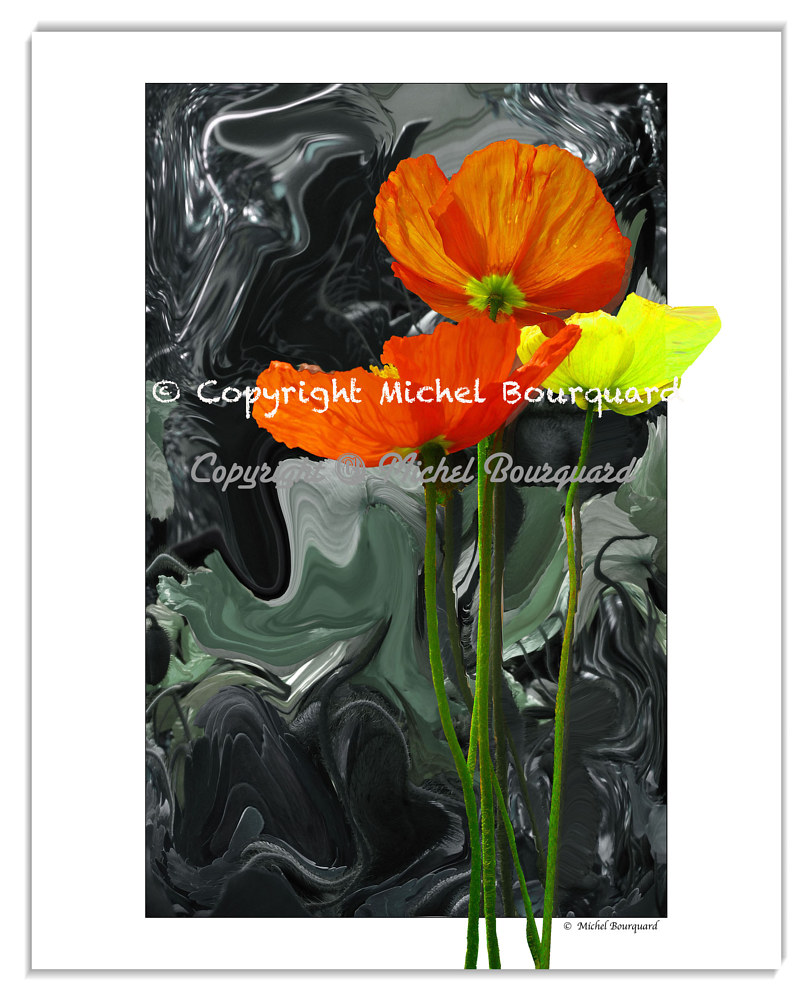 Stormy Poppies - Pr facemount by Michel Bourquard