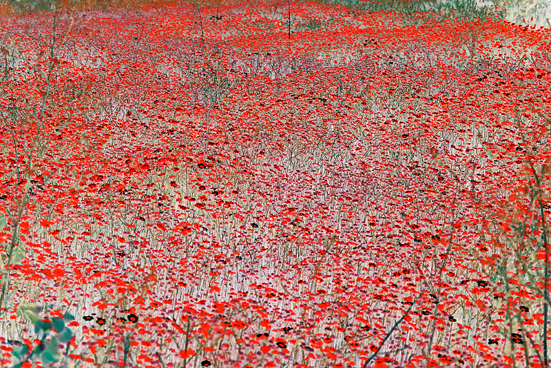 "Painting ""Red Field (after Monet)"" by Hunter Madsen"