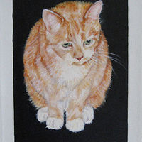 Oil painting Katie Kat by Judith  Elsasser
