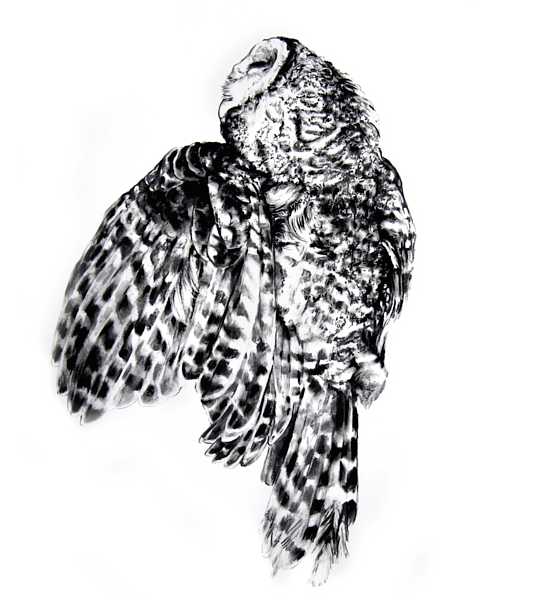 Drawing Kate Puxley - Owl   by Julie Gladstone