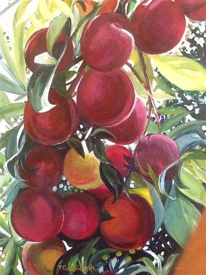 Aromasplums by Terry Joseph