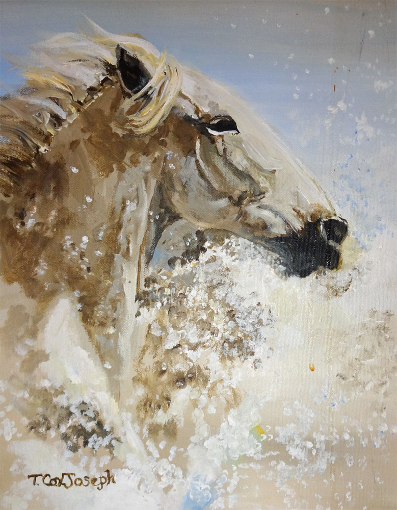 WhiteEquineSplashmedium by Terry Joseph