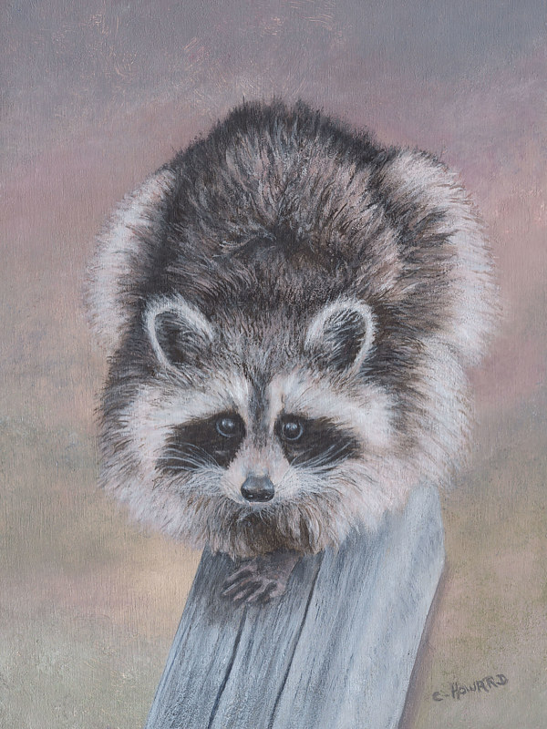 "Acrylic painting Racoon ""Torai"" by Catherine Howard"