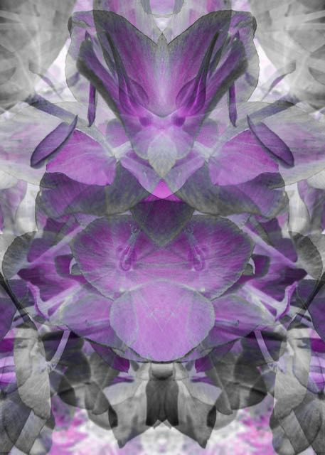 Purple Petals by Elaine Lauzon