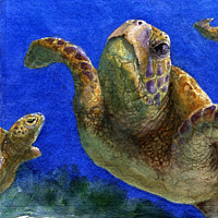 Painting Sea Turtle Skies by Lisa  Baechtle