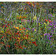Sumac & Asters by Wayne Mazorow