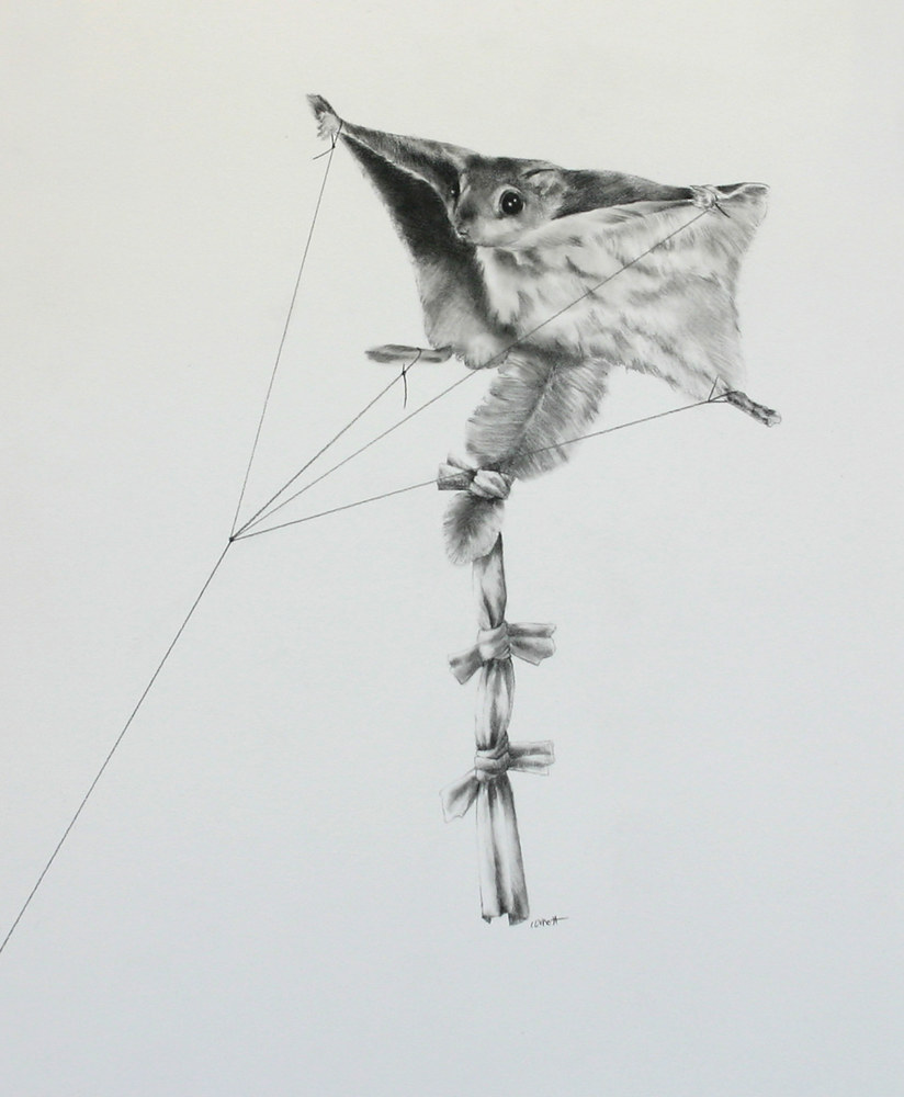Drawing Flying Squirrel by Ellen Cornett