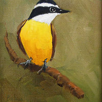 Oil painting  Kiskadee  by Barbara Haviland