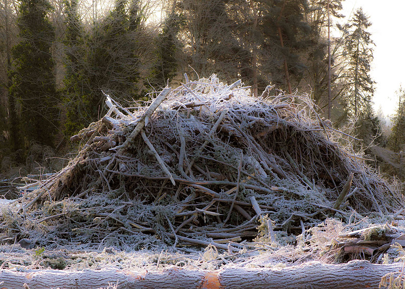 """Morning Frost on Construction Snag Pile"" by Hunter Madsen"
