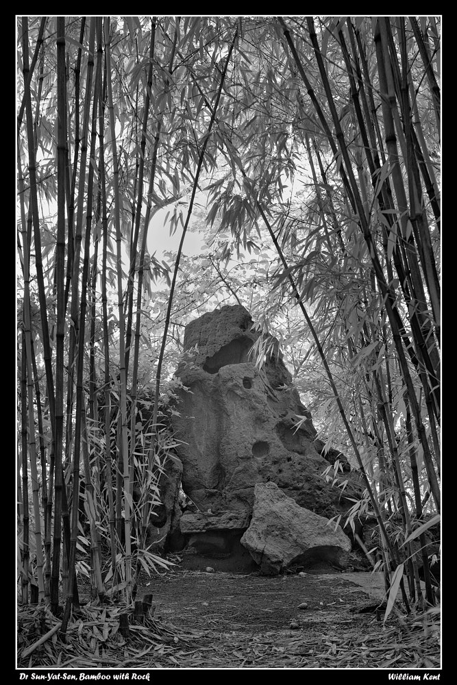 Bamboo with Rock by William Kent