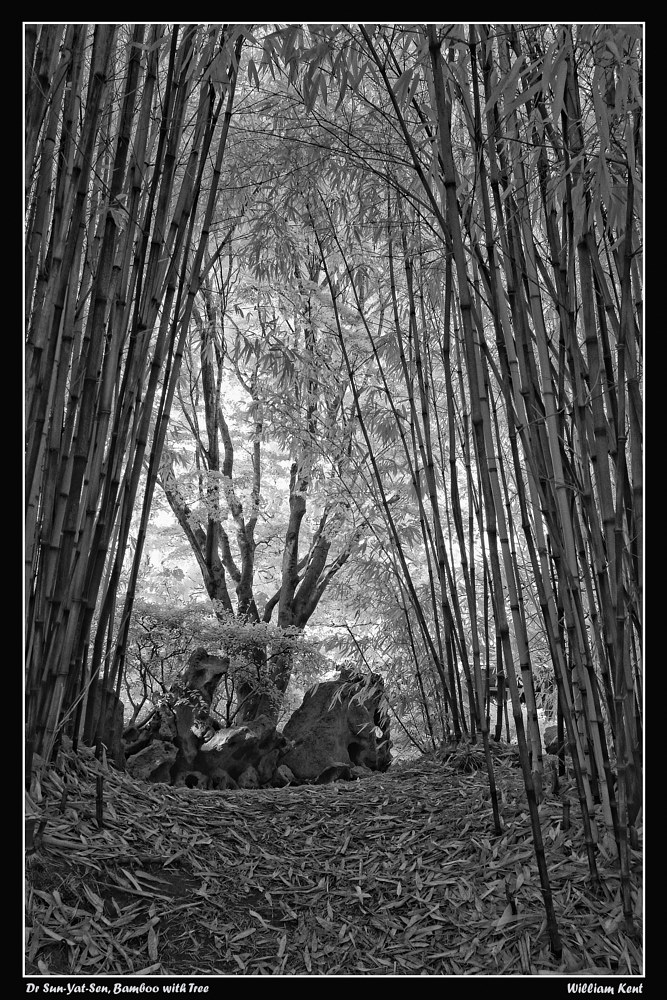 Bamboo with Tree by William Kent