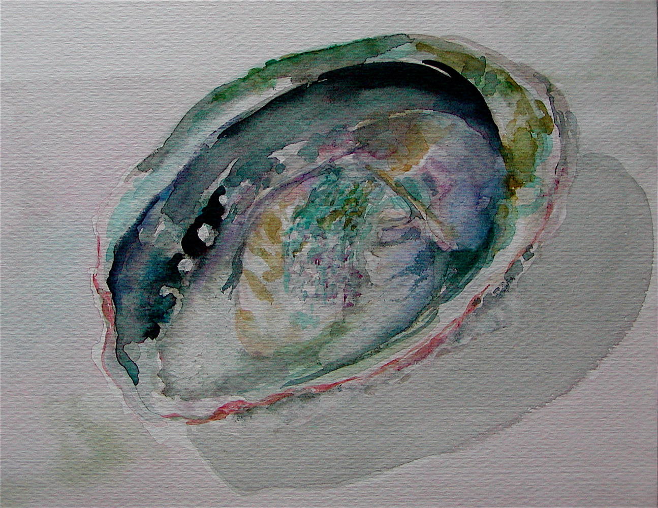 "Watercolor ""Abalone"" by Victoria Avila"