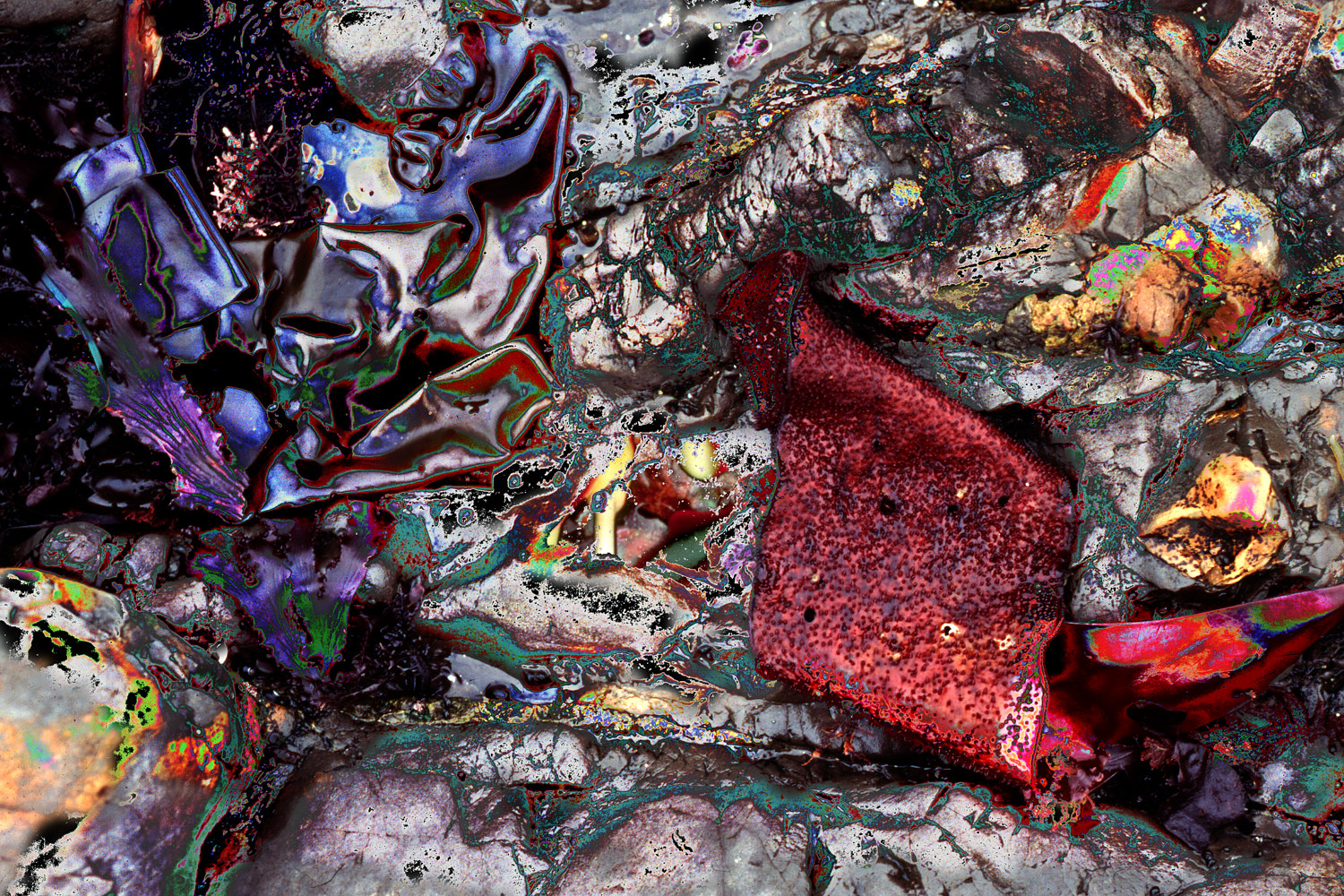 Photography Tidepool Series #10 by Kathleen Gross