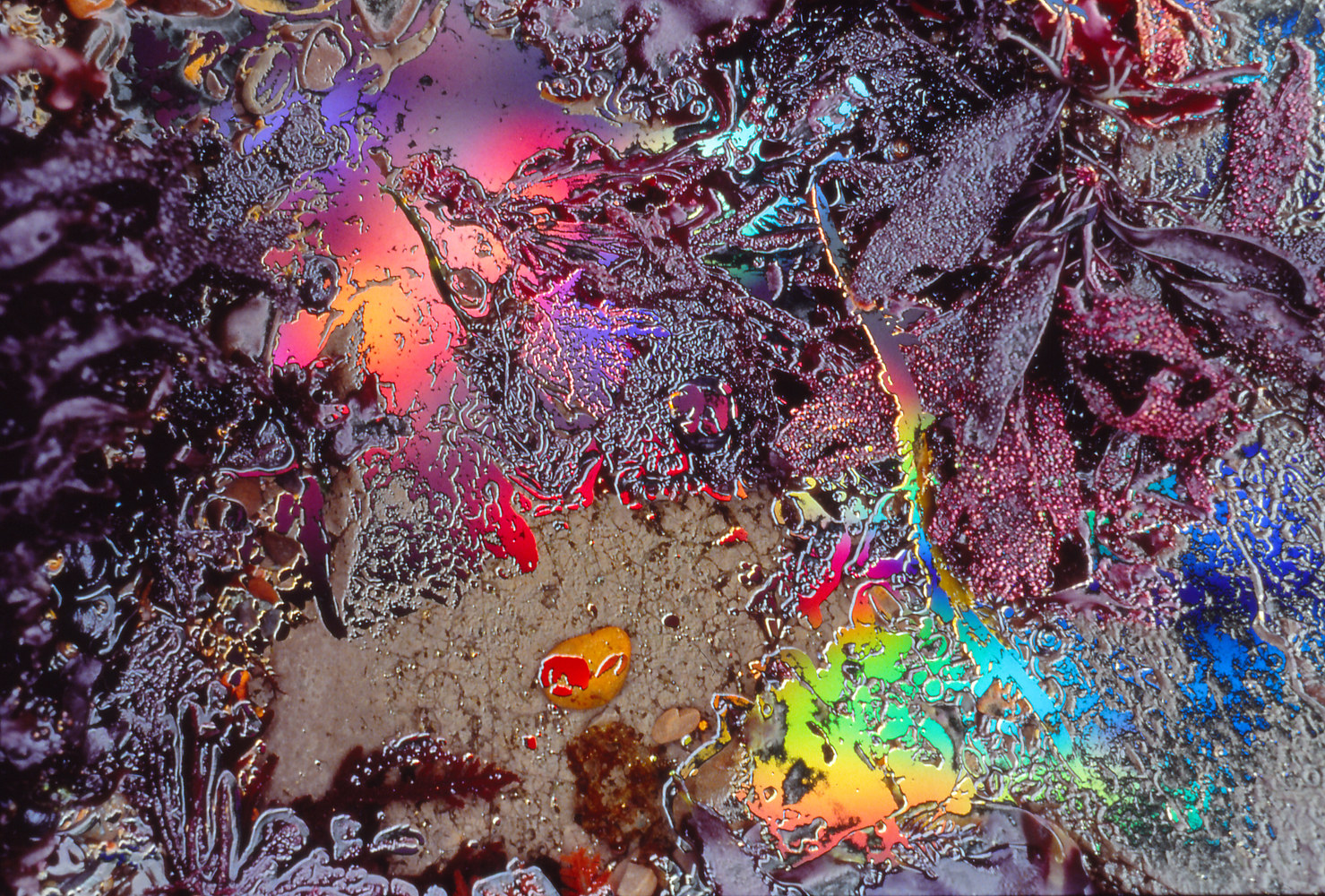 Photography Tidepool Series #11 by Kathleen Gross
