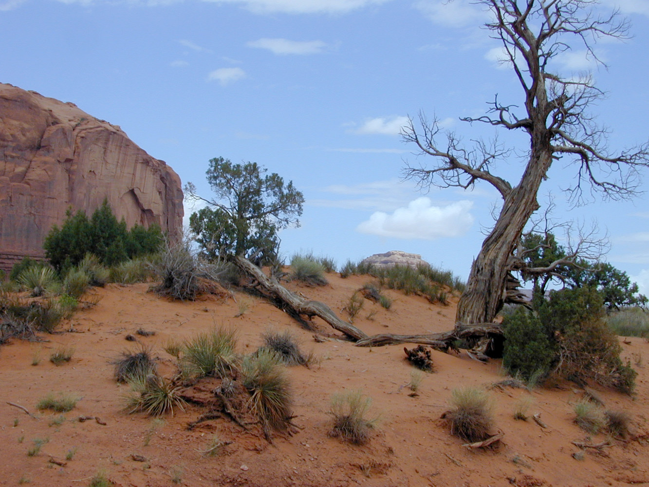 Tree at Arches by Kathleen Gross