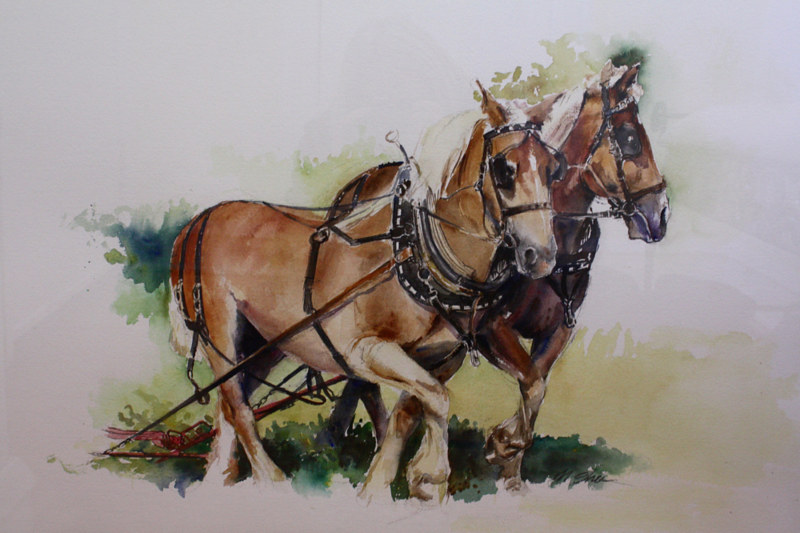 Watercolor draft horses by Madeline Shea