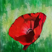 Oil painting Single Poppy by Frans Geerlings
