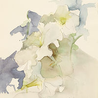 Watercolor Petunia by James Dougan