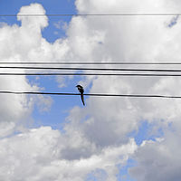 """Bird on the Wire"" by Hunter Madsen"