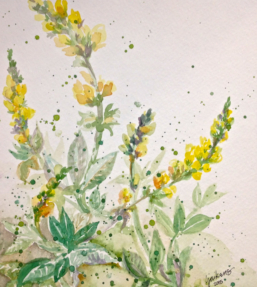 "Watercolor ""Pine Mountain Wild Flowers""  by Linnie (Victoria) Aikens Lindsay"
