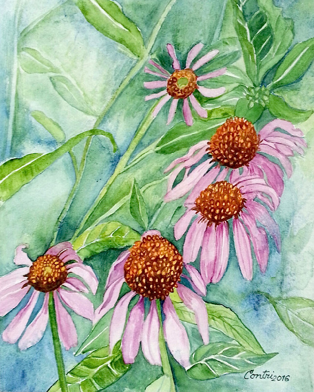 Coneflowers in Garden 2016 by Kathleen Contri