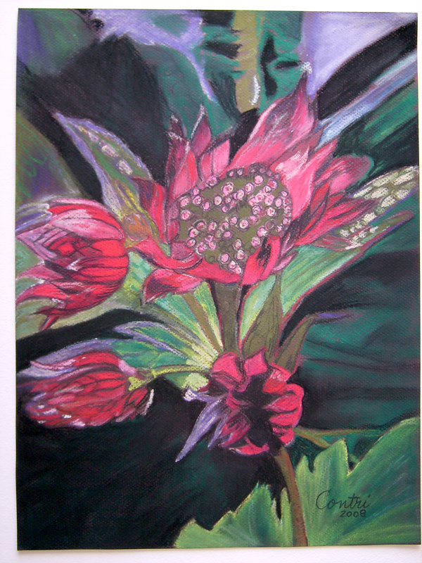 pinkish red flower (pastel) by Kathleen Contri