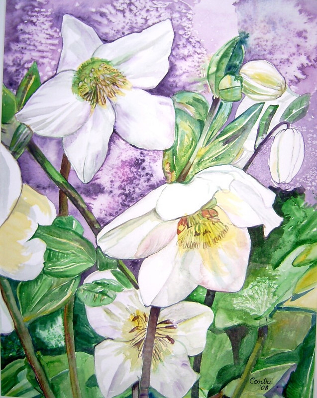 white flowers3 w: purple bkgrd. by Kathleen Contri