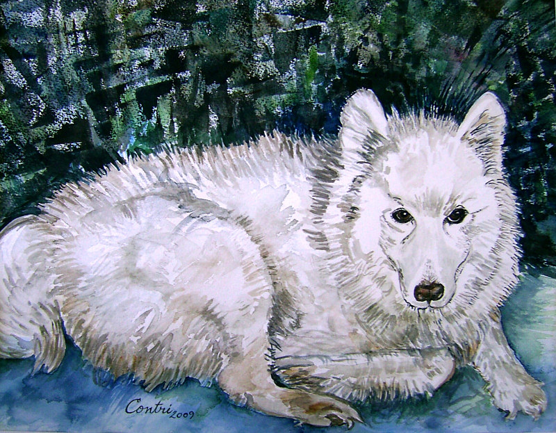 """Our Beautiful Samoyed"" by Kathleen Contri"