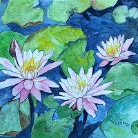 water lilies 2016 by Kathleen Contri