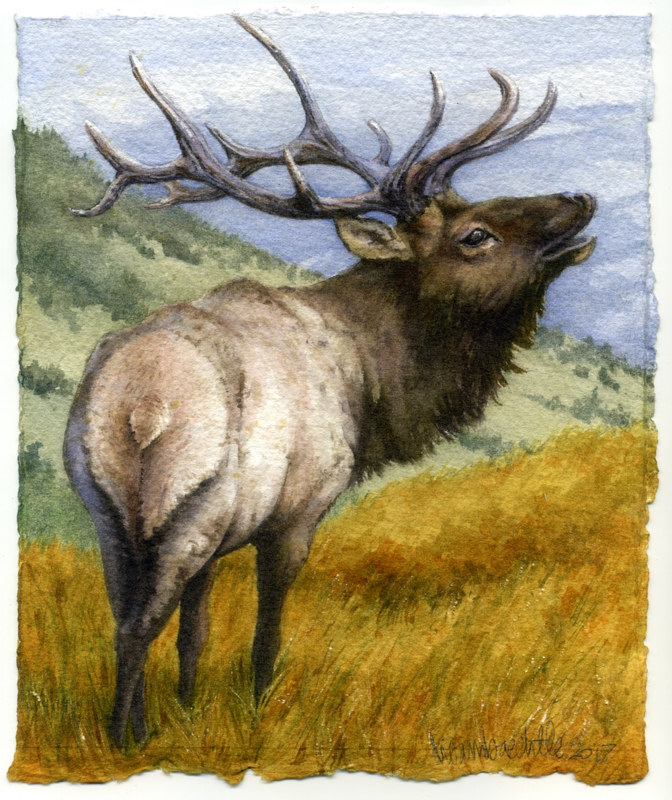 Watercolor Elk by Lisa  Baechtle