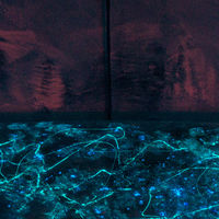 Re-purposed Shortboard (night view detail) by Steven Simmons