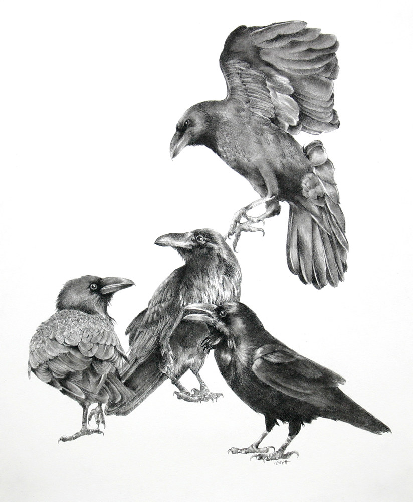 Drawing A Murder of Crows by Ellen Cornett