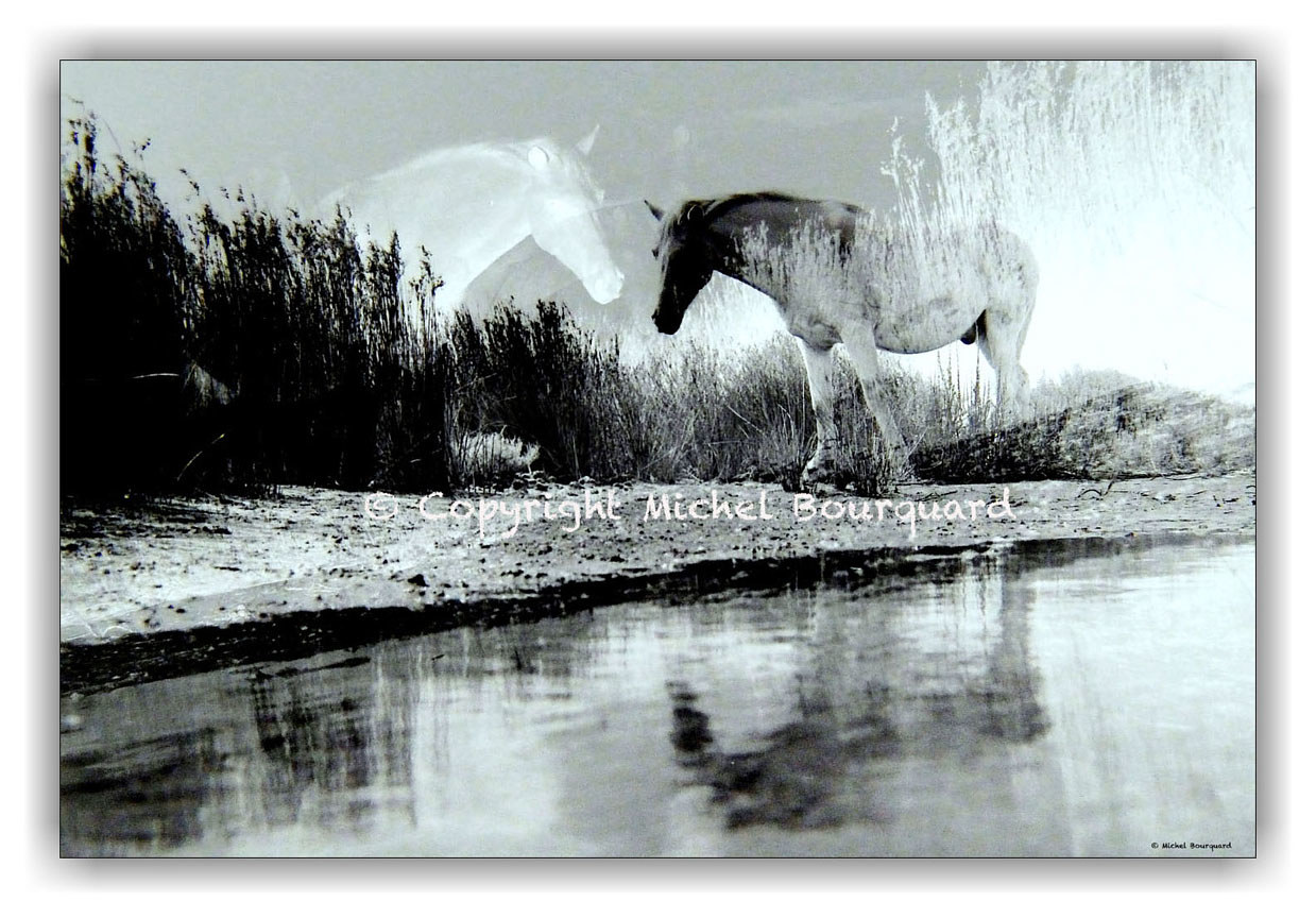 Wild Horses and his reflect by Michel Bourquard