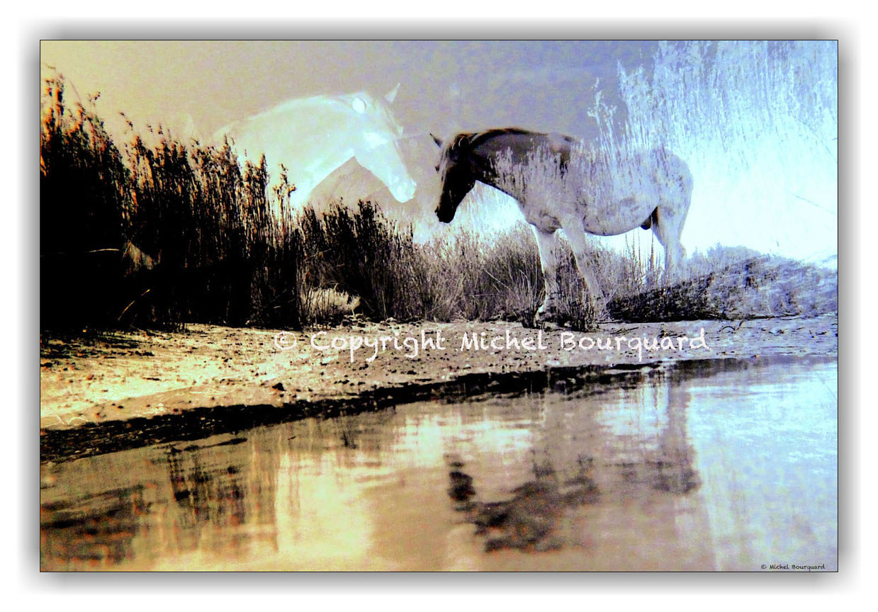 Reflection of a Wild Horse in Camargue  by Michel Bourquard
