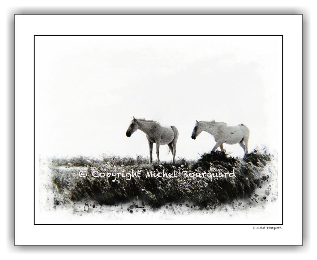 Horse-Camargue  by Michel Bourquard