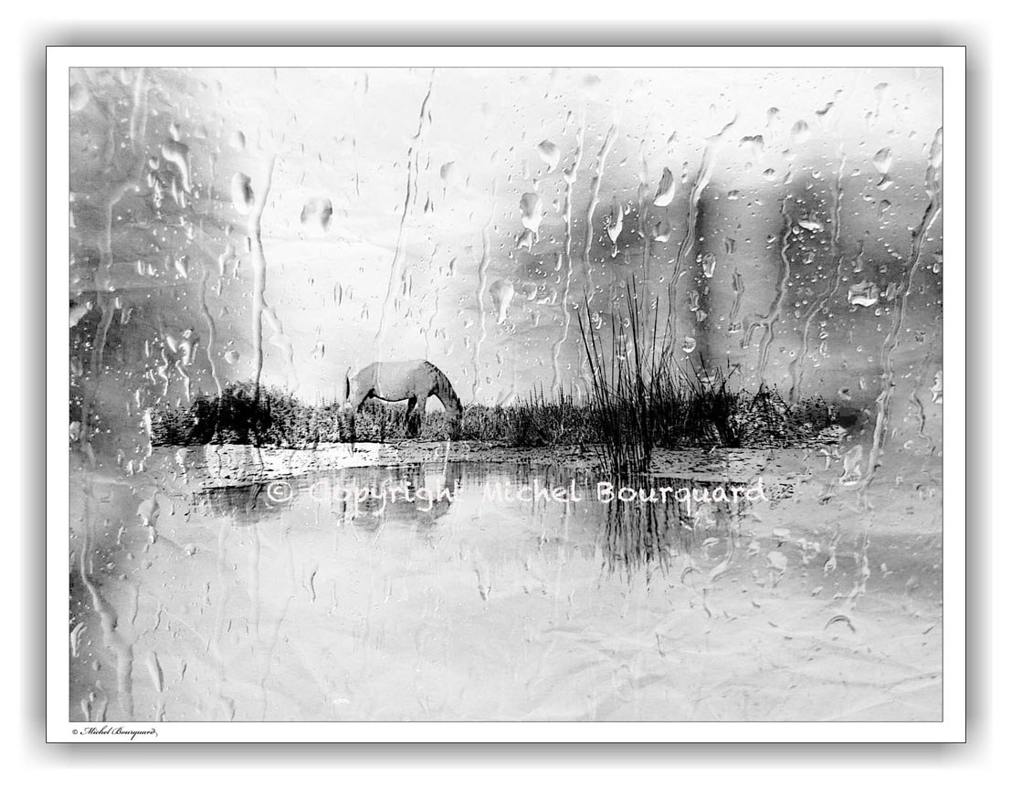 Horse in Camargue on a Rainy Day by Michel Bourquard