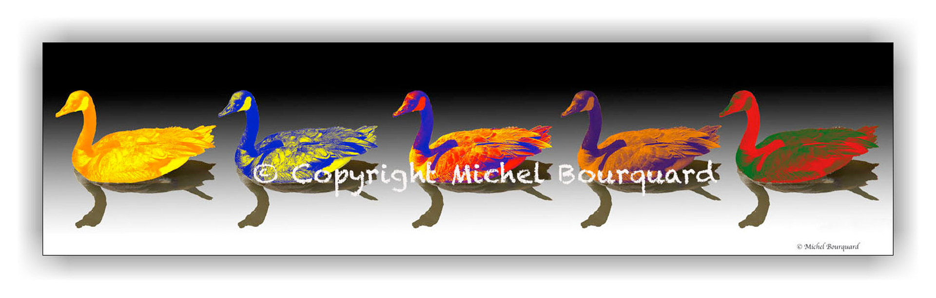 Double Rainbow Ducks  by Michel Bourquard