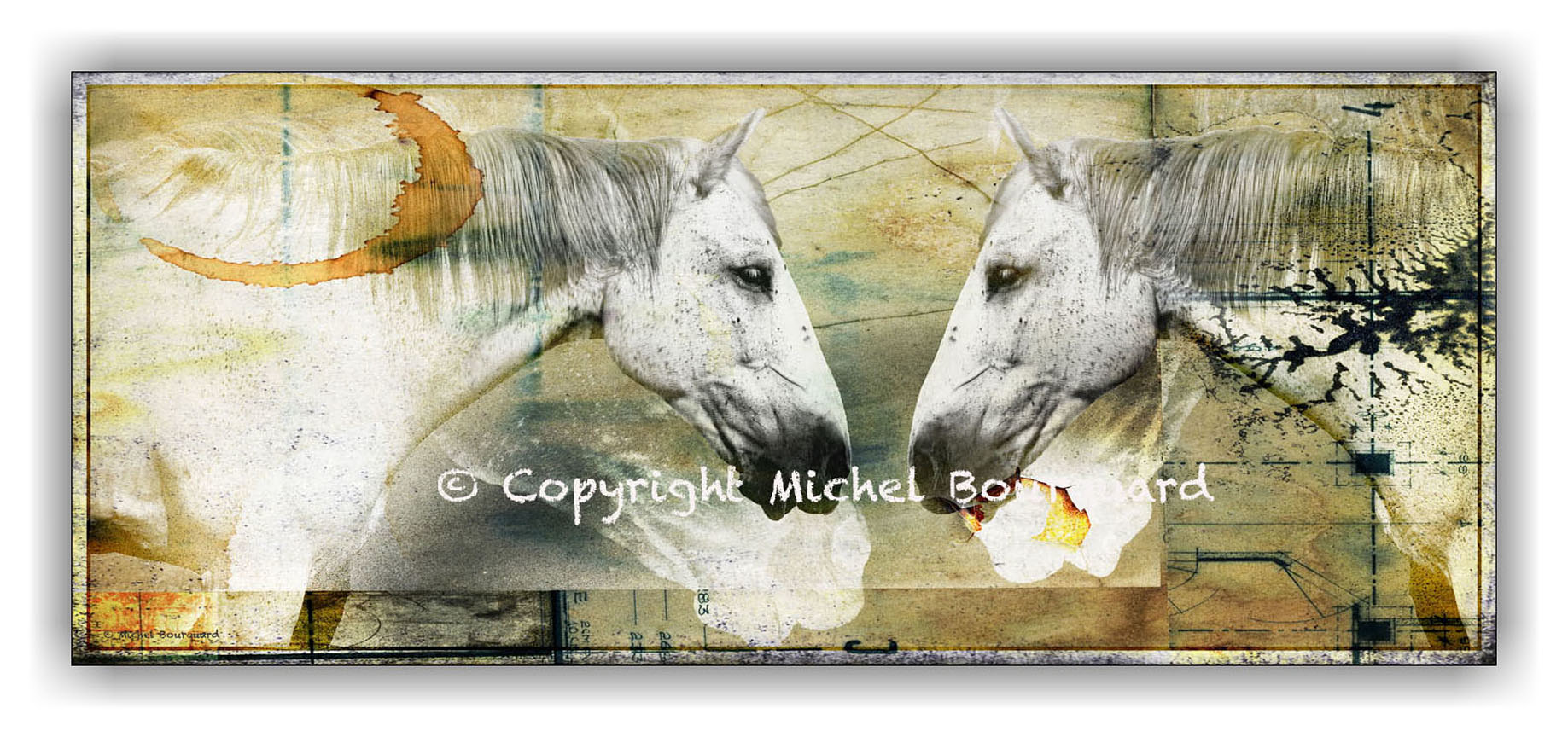 2 Two White Horses_ in a field of dream by Michel Bourquard