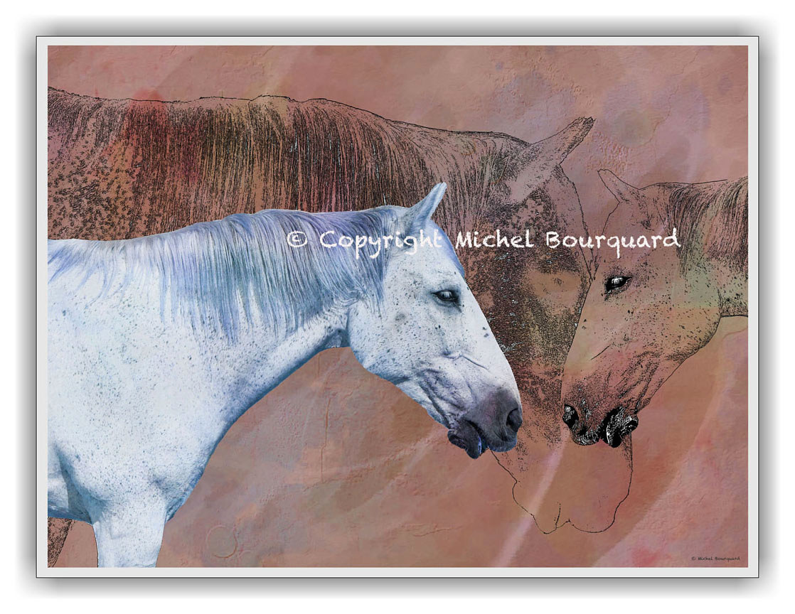 Two white horses - Pastel by Michel Bourquard
