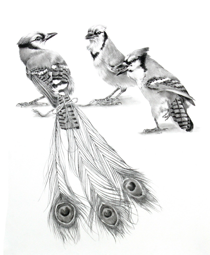 Drawing Jay Wearing Peacock Feathers by Ellen Cornett