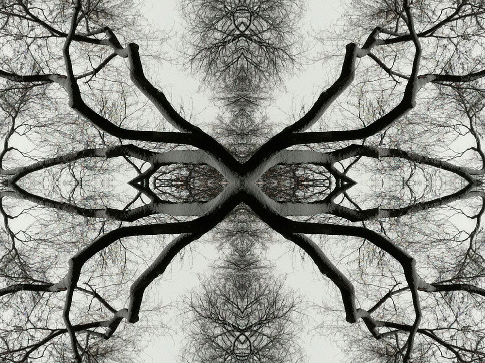 Photography Untitled (Winter Tree 3) - 2011 by Scott Ross