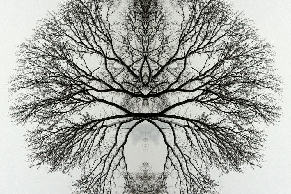 Photography Untitled (Winter Tree 1) - 2011 by Scott Ross