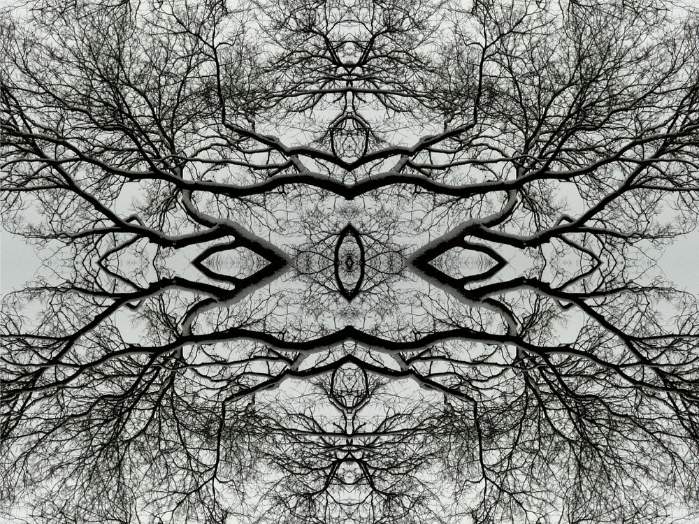 Photography Untitled (Winter Tree 2) - 2011 by Scott Ross