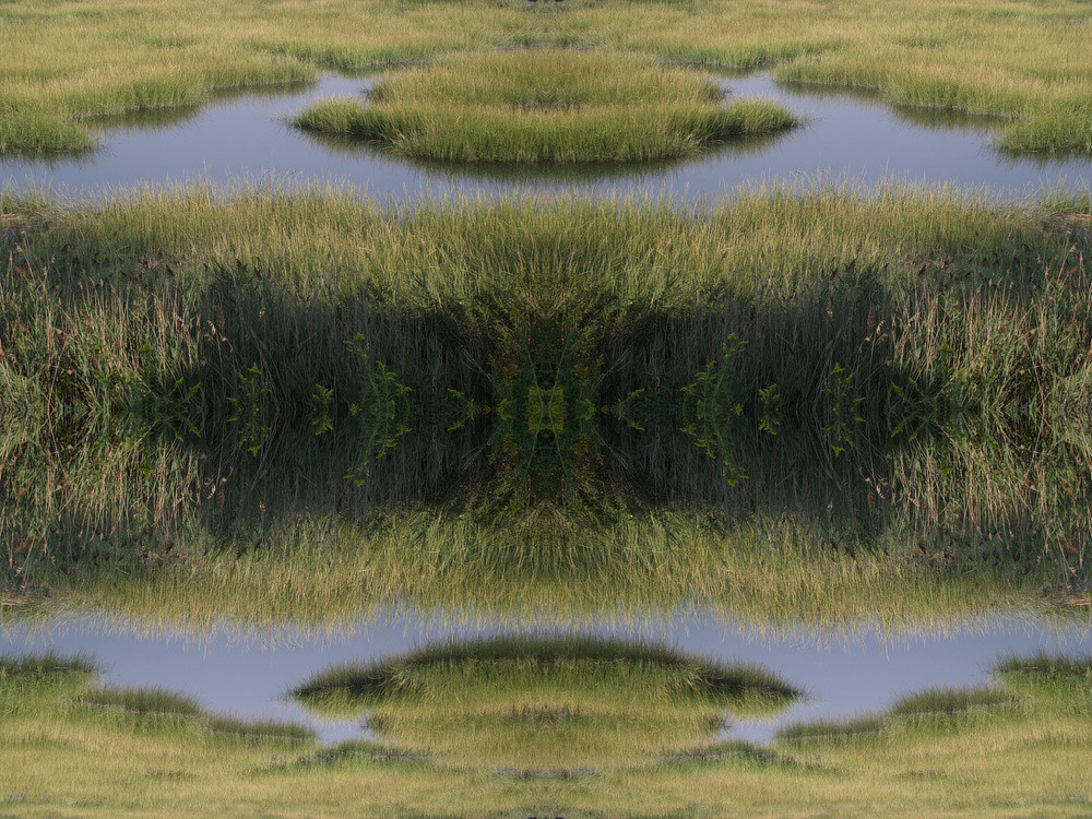 Photography Untitled (Marsh 4) - 2011 by Scott Ross