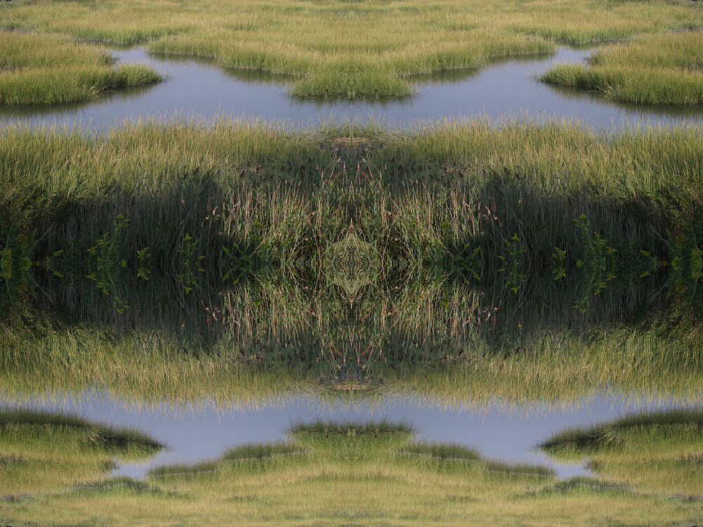 Photography Untitled (Marsh 3) - 2011 by Scott Ross