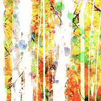 Print ASPENS 10 M by Todd Scott Anderson