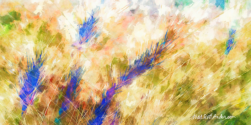 Print MOUNTAIN MEADOW 1 M by Todd Scott Anderson